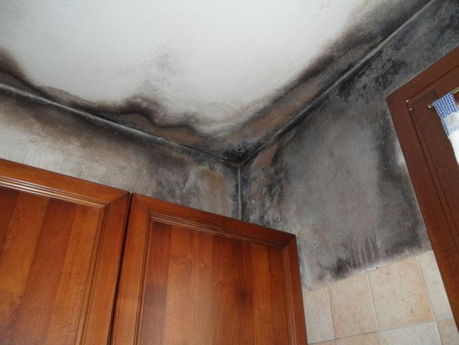 Come rimuovere la muffa in casa - Eliminare condensa in casa ...