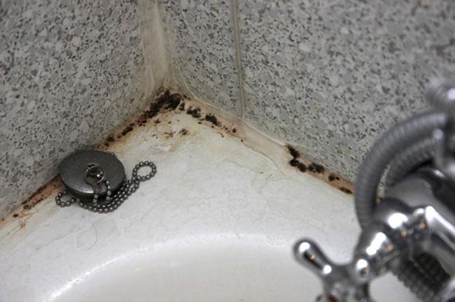 Muffa in bagno: suggerimenti pratici per eliminarla - www ...